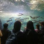 よき旅行家で水族館へ。みんな興味津々でした