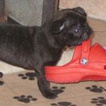 Galmon & Gabriel - die Schuhe sind immer wieder der Renner...