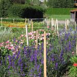 Schnittblumenanbau 2012-2015