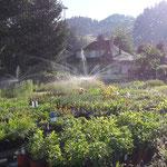 Erweiterte Aussenstellfläche 2016 mit Bewässerung