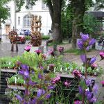 Knäuelblütige Glockenblume, blau