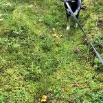 Yuma ist der weltbeste Pilzefinder! ;-)