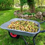Die Zieräpfel werden dieses Jahr entsorgt.