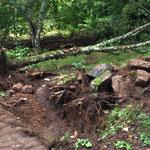 Baum fällen einmal anders, mit dem Bagger umgeschubst...