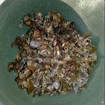 .. verteile ich die gesammelten Samen aus unserem Garten in Deutschland.