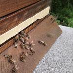 Den Bienchen gefällt es.