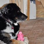 Yuma bewacht uns und schützt sein Schweinchen vor runterfallenden Klemmchen und Nägeln. ;-)