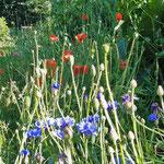 Mohn und Kornblumen