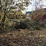 Der Nachbar hat nun den gewünschten Platz, aber über Nacht ist ein weiterer Baum gefallen.