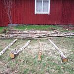 Dickes = ab zum Brennholz