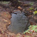 Ein Schreck...so viel Wasser. Aber es kam nicht von unten, sondern ist nur dem vielen Regen der letzten Wochen geschuldet.