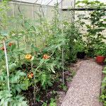 "Tomatenvielfalt: ""Ingeliese"", Ananas, Berner Rose, Zebra rot/grün"