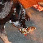 Kaum sitzen wir im Wohnzimmer, steuert Yumi zum Baum und schnappt sich  zielsicher sein Geschenk.. tztztz.