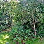 .. unter dem Rhododendron.