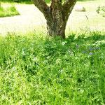 Von den im Herbst gepflanzten Spieren weiterhin keine Spur. :-(