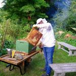 Die Bienchen aus unserem Garten kommen gleich und schauen, was wir da tolles haben.
