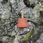Klaiber sind die häufigsten Besucher, aber auch einige Maisen-Arten und zwei Eichelhäher haben wir beobachtet.