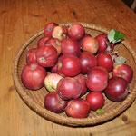 Erste Apfelernte.