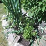 Burrykraut, Rosmarin, Basilikum und Estragon gepflanzt.
