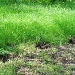 Michel hat die von Claudia geschenkten Himbeeren eingepflanzt. Da brauchen wir etwas grünen Daumen, denn sie waren in Deutschland einer kleinen Durststecke erlegen. *ups