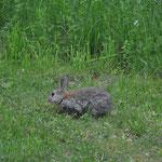 """Über Nacht kommen diese kleinen Übeltäter und buddeln überall kleine Löcher in unseren """"englischen Rasen"""". ;-)"""