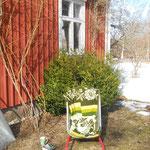 Mein bester PLATZ zum Lesen. In Ermangelung von Gartenmöbeln: Die Schubkarre.