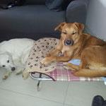Kira e Kira :-)