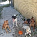 Bach, Kira, Penny e Vicky