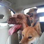 Maya, Ross e Kira