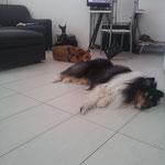 Benjamin,  Kira e Molly