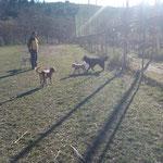 Bach, Kira, Chicco e Shiko sotto la supervisione di Hemil :-)