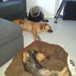Eolo , Kira e Molly