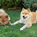 Andor legt die Pfote zu Ronja - wie süß!