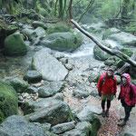 白谷雲水峡ツアー、冬の屋久島も青々とした苔の世界。