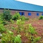 Sobald Regen fällt spriessen um das Schulhaus wieder Pflanzen
