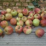 Een deel van de appeloogst van dit jaar