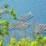 Sußwasserfischzucht in Danau Batur