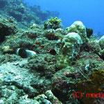Siehst Du den Kraken??
