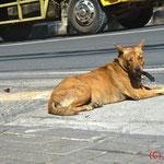 Balinesen glauben: böse Schwiegermütter werden im nächsten Leben ein Hund