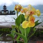 Wassertempel Puru Ulun Danu Bratan, im Vordergrund Orchidee