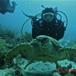 Karettschildkröte und Silvi