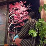 アトリエFoo*wa 12月のお庭 紅葉