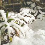 アトリエFoo*wa お庭の雪景色 お正月