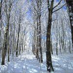 La forêt chez nous sous la neige