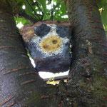 Kunstwerk aus dem Schulprojekt 'Steinzeitmalerei reloaded': Eule im Baum