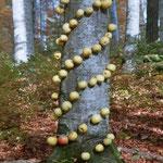 Schweiz, Worb, Apfelbaum