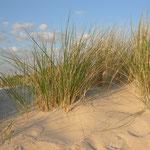 Blick aus den Dünen, Amrum