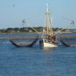 Krabbenfischer
