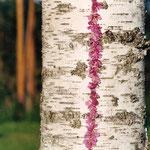 Finnland, Harz und Blüten