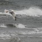 Nordsee, Mordsee